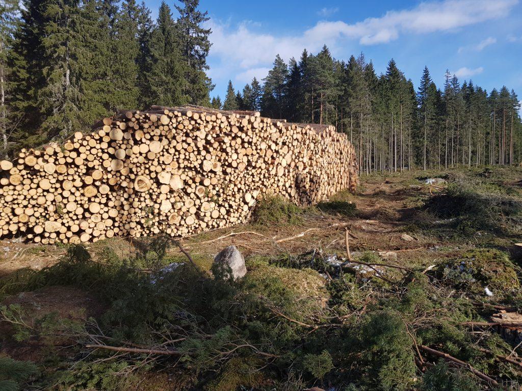 Skog timmer